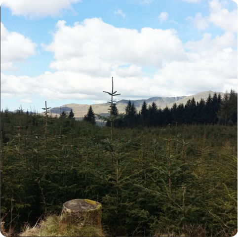 grizedale2